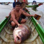 Пойманный сиамский или гигантский усач в лодке
