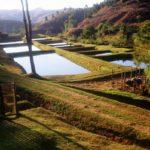 водоемы, где выращивают карпов