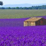 домик в лавандовом поле