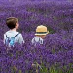 мальчики в поле лаванды