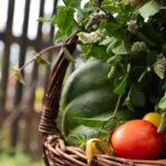 мята и овощи