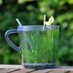 напиток из свежих листьев мяты