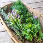 лекарственные травы в лукошке