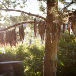 сушеная селедка на дереве