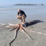 большой кальмар на пляжном береге