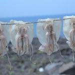 тушки сушеных кальмаров