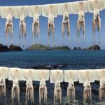 сушеные кальмары, море