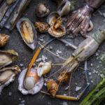 морекпродукты, кальмар, мидии, устрицы