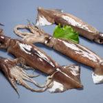 тушки кальмаров
