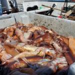 улов кальмаров