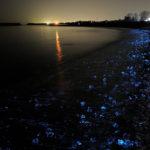 светящиеся кальмары ночью