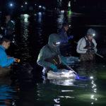ночной вылов кальмаров