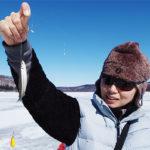 пойманная корюшка на зимней рыбалке