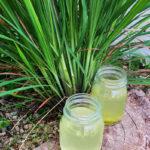 напиток из лимонника (лемонграсса)