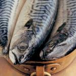рыба скумбрия с головой крупным планом