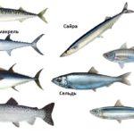 отличия скумбрии от других рыб