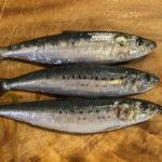 три свежих рыбины иваси