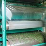 сушка листьев чая перед перемалыванием в порошок маття
