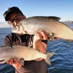 два крупных сига в руках рыбака