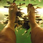 лечение рыбками гарра руфа