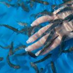 маникюр рыбками гарра руфа