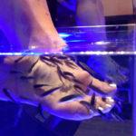 ноги в емкости с рыбками гарра руфа