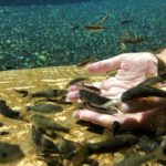 польза рыбок гарра руфа для рук