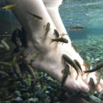 спа-процедуры для ног с рыбками