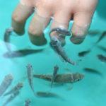 пилинг рук рыбками гарра руфа