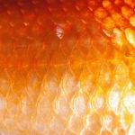 чешуйки копченой рыбы