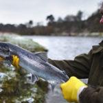 рыбалка на лосося