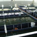 фермерское рыбное хозяйство