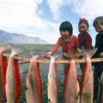 красная рыба для детей