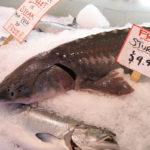 охлажденные белуга и лосось