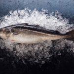 полезная рыба сайда