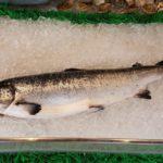 свежезамороженный лосось