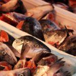 рыбьи головы в продаже