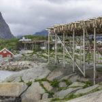 сушка рыбы, Норвегия