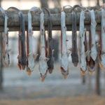 сушение рыбы на свежем воздухе