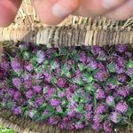 клевер в корзине, заготовка сырья