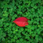 красный лист на зеленой траве