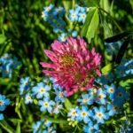 розовые и синие цветы