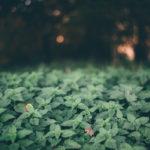 крапива в лесу