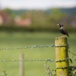 птица возле крапивы
