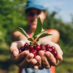 польза вишни для женщин