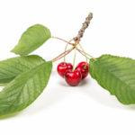 вишни лист