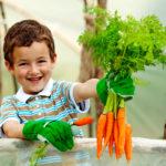 морковный чай детям