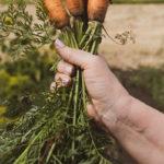 вырвать морковку