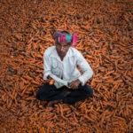 промышленный сбор моркови