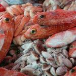 вредная рыба